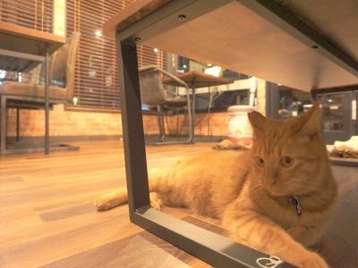 千代丸は光が出る猫ビームで遊ぶのが大好きです。赤い光を追いまわしてます。